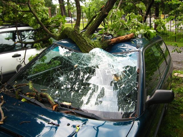 tree-fell-subaru