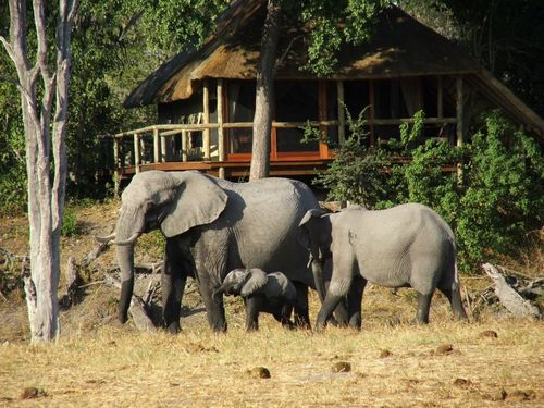 savuti_elephants_room1