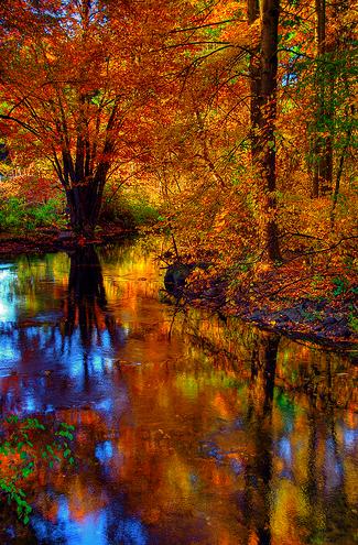 """""""Fall Foliage"""" by Slack12 (Flickr)"""
