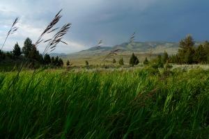landscape_melissa